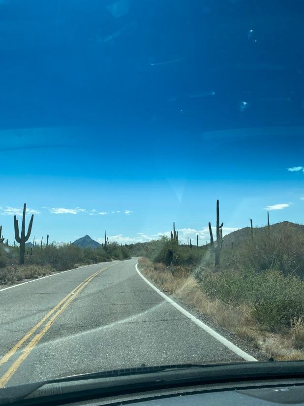 Cactus drive jpg